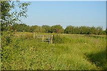 SP4609 : Thames Path by N Chadwick
