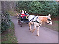 SX8963 : Horse-drawn carriage for Santa Claus, Cockington by David Hawgood