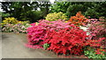 SJ8773 : Henbury Hall Gardens near Macclesfield - Azaleas by Colin Park