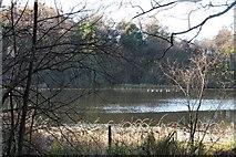 SE5976 : Lower Fish Pond, Park Wood by Gordon Hatton