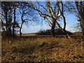 TA2922 : View through Enholmes Plantation to Buckclose Plantation by Jonathan Thacker