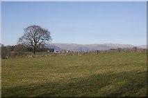 NS7887 : Field, Craigend by Richard Webb
