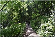 SX4449 : South West Coast Path by N Chadwick