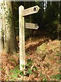 SO5202 : Signpost on the Wye Valley Walk by Philip Halling