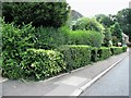 TQ8110 : Hedges at the south eastern end of Park View, Hastings by Patrick Roper