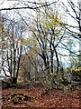 NJ8130 : Autumn leaves in Denwood by Stanley Howe