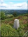 SJ2540 : Llanerch Farm trig point by Richard Law
