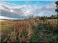 NH6350 : Overgrown path Bogallan by valenta