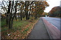 SK5445 : Pavement and woodland strip beside Hucknall Road (A611) by Roger Templeman