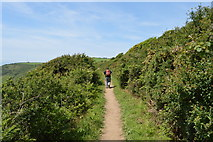 SX4348 : South West Coast Path by N Chadwick