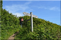 SX4248 : South West Coast Path signpost by N Chadwick