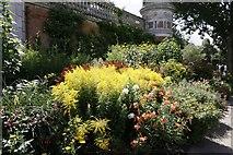 SU9185 : Floral display by Bill Nicholls