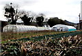 SO3321 : Polytunnels in Pandy, Monmouthshire by Jaggery