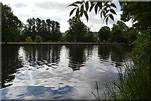 SU8485 : River Thames by N Chadwick