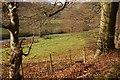 NO0101 : River Devon beside Fossoway Lodge by Richard Webb