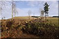 NO0002 : Felled area, Upper Yetts by Richard Webb