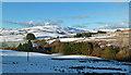 NS4001 : Baing Farm View : Week 50
