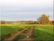TM2844 : Waldringfield: a path to the river by John Sutton