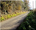 SO3828 : Dark Lane on a sunny day, Ewyas Harold by Jaggery