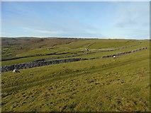 SE0064 : Grass Wood and Lea Green by Carroll Pierce