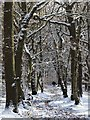 SK3182 : Ecclesall Woods in Wintertime : Week 50