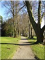 SX5155 : The lime avenue, Saltram garden by David Smith