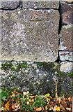 SE0339 : Benchmark on Branshaw Plantation wall by Roger Templeman