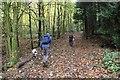 SO5586 : Footpath through Wynett Coppice by Jeff Buck
