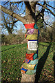 SP8309 : Tree with a Message by Des Blenkinsopp