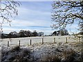 NZ1648 : Grazing field under snow by Robert Graham