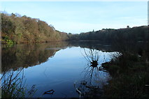 NS2209 : The Swan Pond, Culzean Country Park by Billy McCrorie