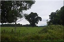 TQ3129 : Tree in field by N Chadwick