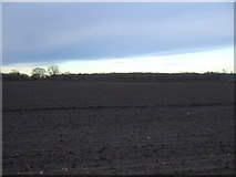 SE3982 : Field north of Sandhutton Lane by JThomas