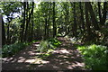SX4551 : South West Coast Path, Mount Edgcumbe Country Park by N Chadwick