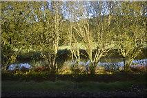 SX1061 : River Fowey by N Chadwick