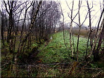 H5172 : Cloghfin Townland by Kenneth  Allen