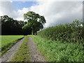 ST5607 : Bridleway to Clarkham Cross by Jonathan Thacker