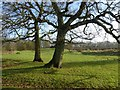 SP0575 : Oak trees on a picnic site by Philip Halling