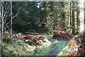 NX2764 : Woodland Path at Knockbrake Wood by Billy McCrorie