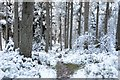 NT3037 : Snow in Cardrona Forest by Jim Barton