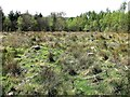 TQ7920 : Regeneration following conifer clearance, Brede High Woods by Patrick Roper