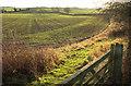 SE3166 : Bishop Monkton Moor by Derek Harper