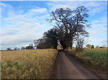 TM2743 : Towards Waldringfield on Mill Road by John Sutton
