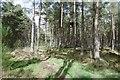 NJ8117 : Path, Balbithan Wood by Richard Webb