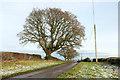 SE2867 : Oak trees along Whitcliffe Lane by Derek Harper