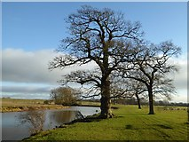SO8844 : Trees beside Croome River by Philip Halling