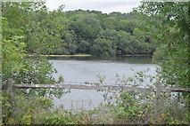 TQ3329 : Ardingly Reservoir by N Chadwick