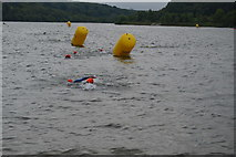 TQ3328 : Openwater swimmers, Ardingley Reservoir by N Chadwick