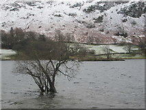 NY3916 : Trees in Ullswater by Peter S
