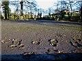 H4772 : Muddy footprints, Cranny car park by Kenneth  Allen